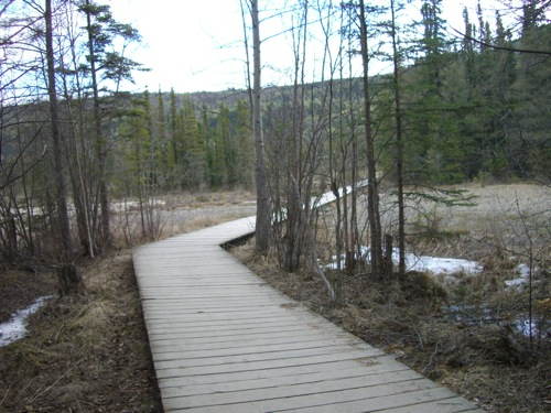 Liard Hot Springs boardwalk