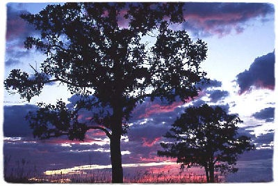 sunrise at Birds Hill Provincial Park (photo by the government of Manitoba)