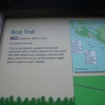 entering the Bog Trail