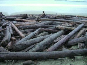 access to beach blocked by logs