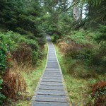 boardwalk on the Nuu-chah-nulth trail