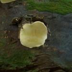 grafittied mushroom