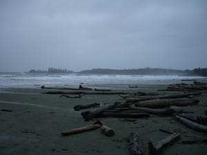 logs on Long Beach