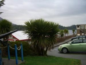 my car next to a palm tree :)