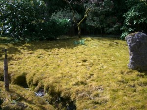 moss-covered ground