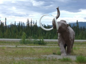 between the Alaska Highway and the parking lot, a family of mammoths plays (dad shown)