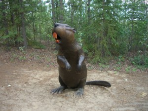 "this giant beaver apparently existed once upon a time. He was as tall as I am--5'6""!"