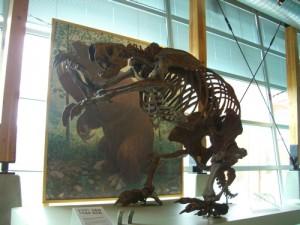 a giant sloth!