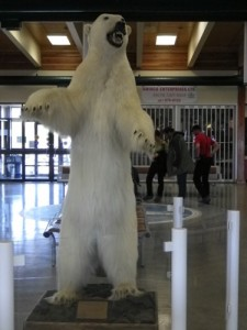 this little guy died of natural causes and is displayed at the Inuvik airport