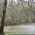 various fowl on the Willamette River