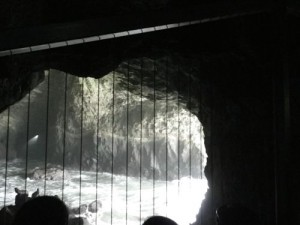 at Sea Lion Caves