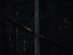 the strange tree/snare setup in the middle of our site