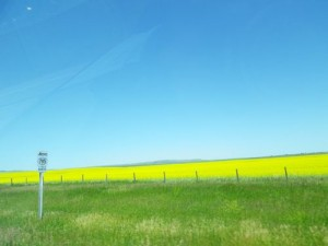 striking image of canola fields!