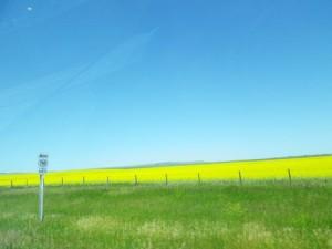 striking image of canola fields!