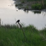 bird near Donna's RV park