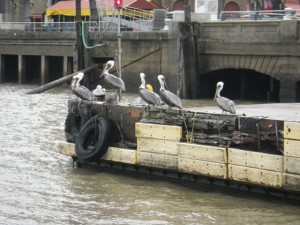 These birds are obviously used to the ferry.