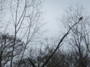 I believe that's a hawk sitting on that branch. We saw lots and lots of birds, but they were tricky to photograph!