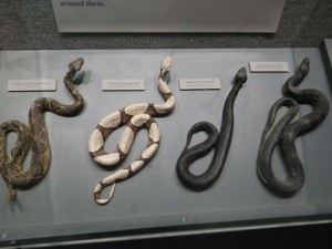 I enjoyed the exhibit about snakes.