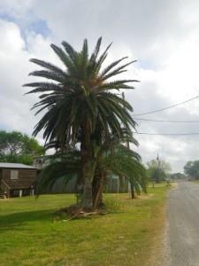 I love these taller palms with the orange bits.