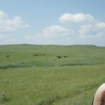 These cattle were running the way you see bison do in Western movies.